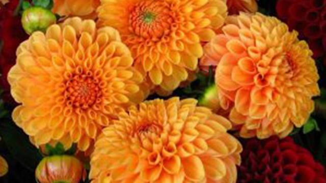 fiori matrimonio autunnale