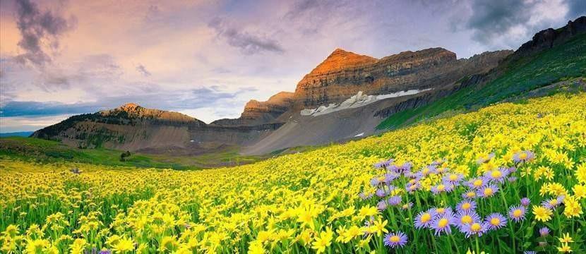 valley of flowers india viaggio di nozze agosto